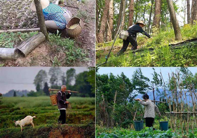 霍山农户的生活