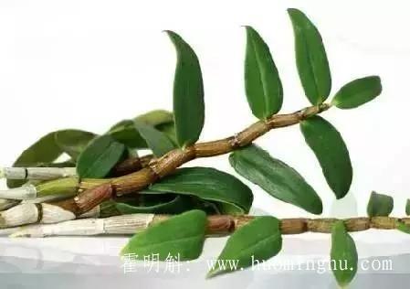 安徽霍山新鲜铁皮石斛5大烹饪吃法即营养又美味