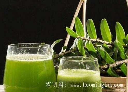 霍山石斛-安徽霍山铁皮石斛
